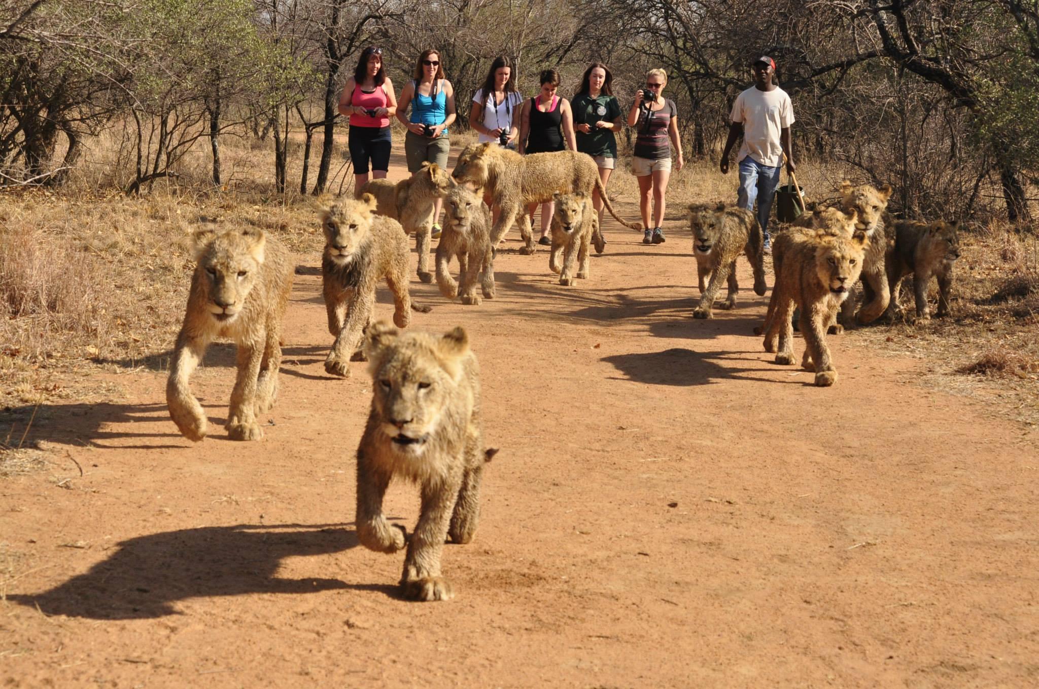 187 Ukutula Lion Park